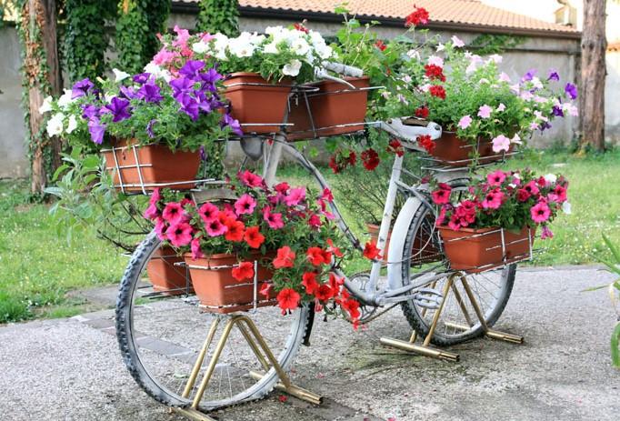 Da Domani. Balconi fioriti per il Giro d'Italia  LeMieNotizie.com