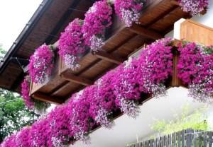 I010968-balcone_gerani-rosa